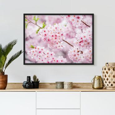 Bild mit Rahmen - Japanische Kirschblüten - Querformat