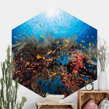 Hexagon Mustertapete selbstklebend - Lagune Unterwasser