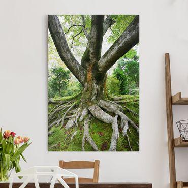Leinwandbild - Alter Baum - Hoch 2:3