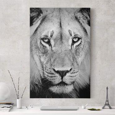 Leinwandbild Schwarz-Weiß - Alter Löwe - Hoch 2:3