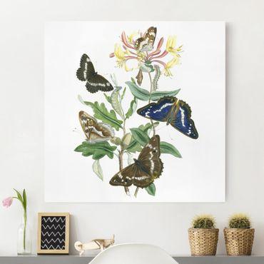 Leinwandbild - Britische Schmetterlinge IV - Quadrat 1:1