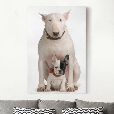 Leinwandbild - Bull Terrier and Friend - Hoch 2:3