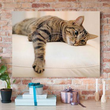 Leinwandbild - Cat Chill Out - Quer 4:3