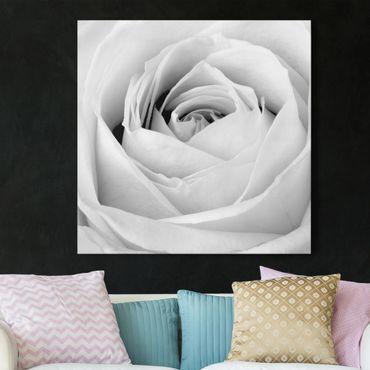 Leinwandbild Schwarz-Weiß - Close Up Rose - Quadrat 1:1