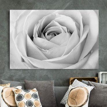 Leinwandbild Schwarz-Weiß - Close Up Rose - Quer 3:2