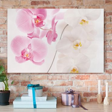 Leinwandbild - Delicate Orchids - Quer 3:2