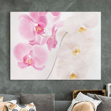 Leinwandbild - Delicate Orchids - Quer 4:3