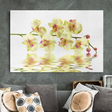 Leinwandbild - Dreamy Orchid Waters - Quer 3:2
