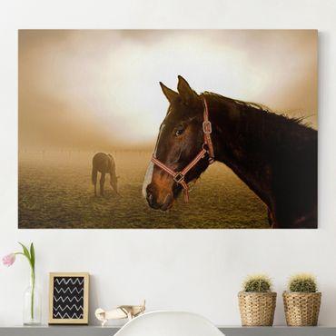 Leinwandbild - Early Horse - Quer 3:2