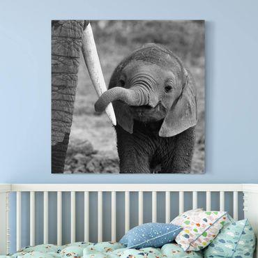 Leinwandbild - Elefantenbaby - Quadrat 1:1