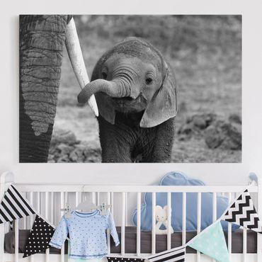 Leinwandbild - Elefantenbaby - Quer 3:2