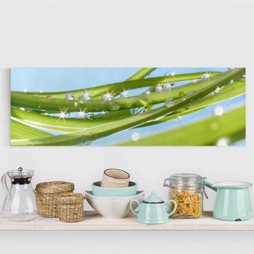 Leinwandbild - Fresh Green - Panorama Quer