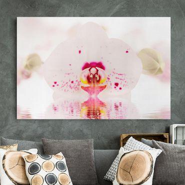 Leinwandbild - Gepunktete Orchidee auf Wasser - Quer 3:2