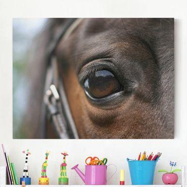 Leinwandbild - Horse Eye - Quer 4:3