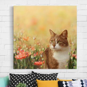 Leinwandbild - Katze im Mohnfeld - Quadrat 1:1