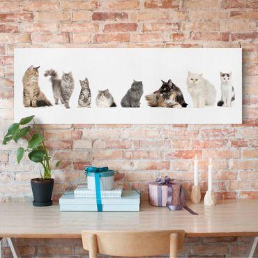 Leinwandbild - Katzenbande - Panorama Quer