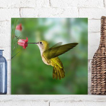 Leinwandbild - Kolibri und Blüte - Quadrat 1:1