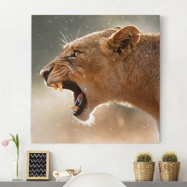 Leinwandbild - Löwin auf der Jagd - Quadrat 1:1