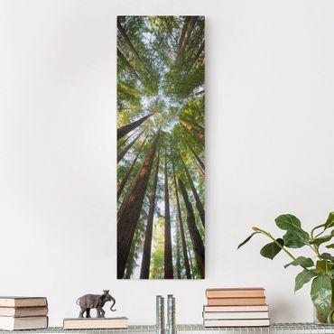 Leinwandbild - Mammutbaum Baumkronen - Panorama Hoch