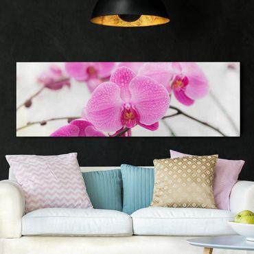 Leinwandbild - Nahaufnahme Orchidee - Panorama Quer