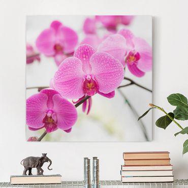 Leinwandbild - Nahaufnahme Orchidee - Quadrat 1:1
