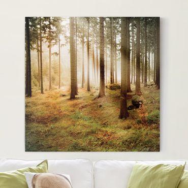 Leinwandbild - No.CA48 Morning Forest - Quadrat 1:1