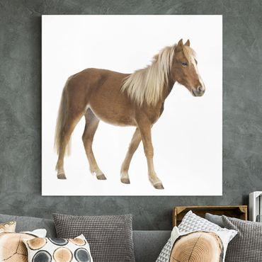 Leinwandbild - Pony - Quadrat 1:1