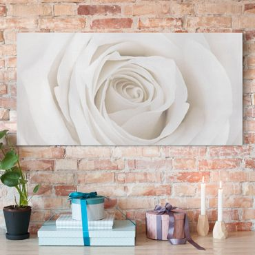 Leinwandbild - Pretty White Rose - Quer 2:1