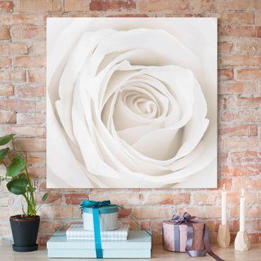 Leinwandbild - Pretty White Rose - Quadrat 1:1