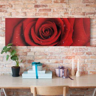 Leinwandbild - Rote Rose mit Wassertropfen - Panorama Quer