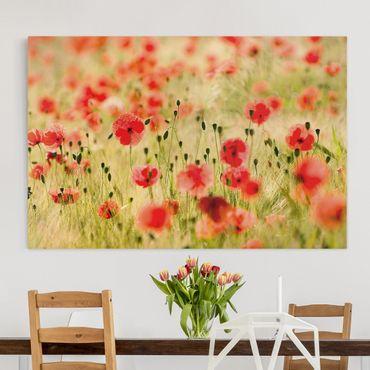 Leinwandbild - Summer Poppies - Quer 3:2