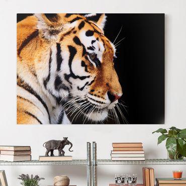 Leinwandbild - Tiger Schönheit - Quer 4:3