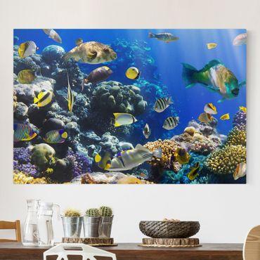 Leinwandbild - Underwater Reef - Quer 3:2