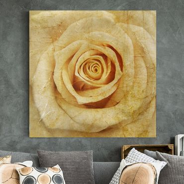 Leinwandbild - Vintage Rose - Quadrat 1:1