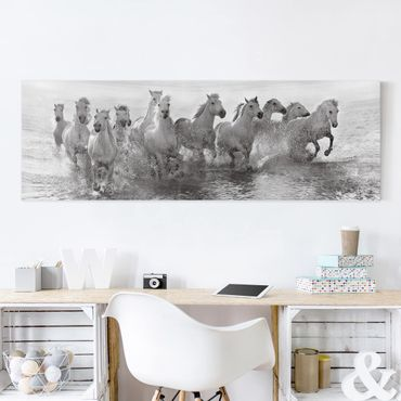 Leinwandbild - Weiße Pferde im Meer - Panorama Quer