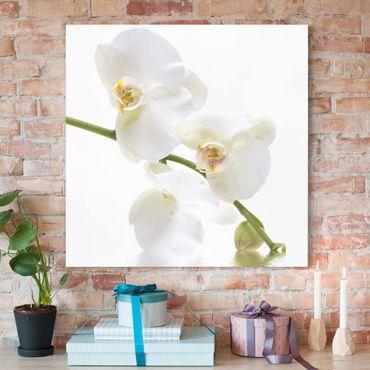 Leinwandbild - White Orchid Waters - Quadrat 1:1