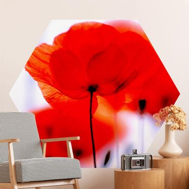 Hexagon Mustertapete selbstklebend - Magic Poppies