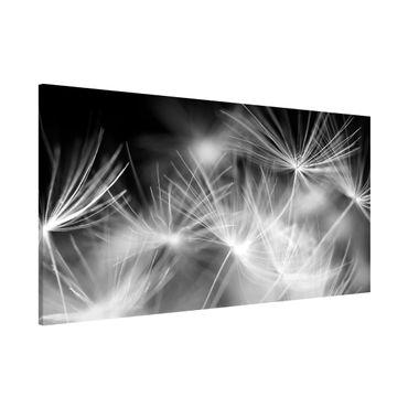 Magnettafel - Bewegte Pusteblumen Nahaufnahme auf schwarzem Hintergrund - Memoboard Panorama Quer