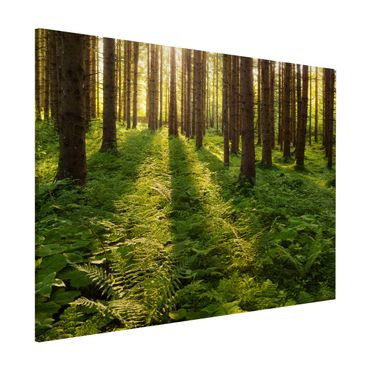 Magnettafel - Sonnenstrahlen in grünem Wald - Memoboard Quer