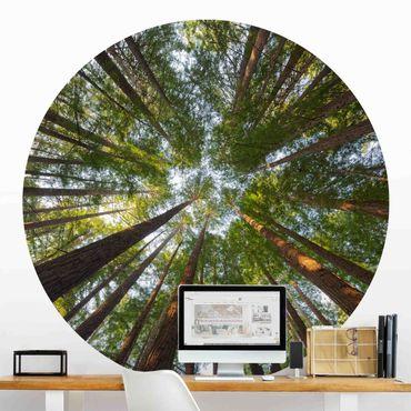 Runde Tapete selbstklebend - Mammutbaum Baumkronen