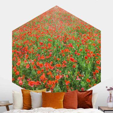 Hexagon Mustertapete selbstklebend - Mohnblumenfeld