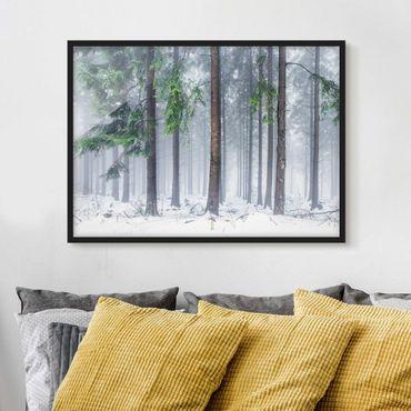 Bild mit Rahmen - Nadelbäume im Winter - Querformat