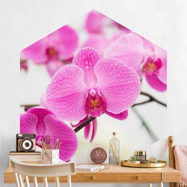 Hexagon Mustertapete selbstklebend - Nahaufnahme Orchidee