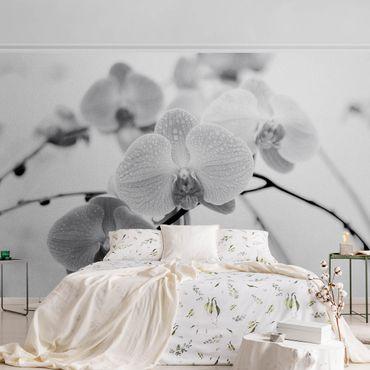 Metallic Tapete  - Nahaufnahme Orchidee Schwarz-Weiß