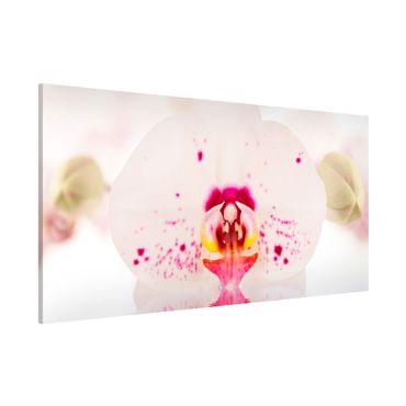Magnettafel - Gepunktete Orchidee auf Wasser - Blumenbild Memoboard Panorama Quer