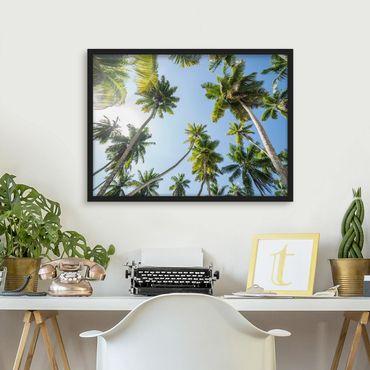 Bild mit Rahmen - Palmen Himmel - Querformat