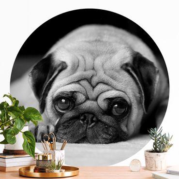 Runde Tapete selbstklebend - Pug Loves You II