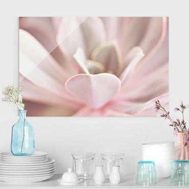 Glasbild - Rosane Sukkulentenblüte - Querformat