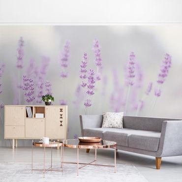 Fototapete - Sommer im Lavendelfeld