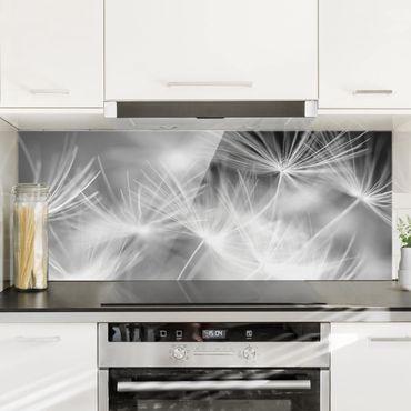 Spritzschutz Glas - Bewegte Pusteblumen Nahaufnahme auf schwarzem Hintergrund - Panorama Quer